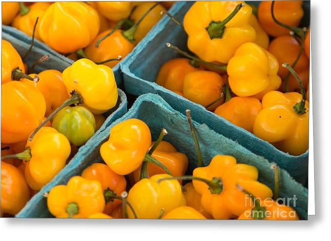 Yellow Peppers In Boxes Greeting Card by Rebecca Cozart