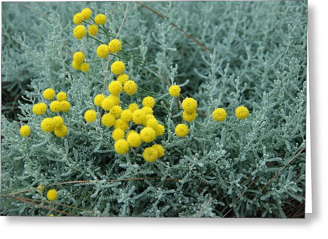 Yellow Pompoms Greeting Card by Leigh Ann Hartsfield
