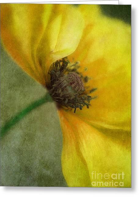 Yellow Poppy Greeting Card by Priska Wettstein