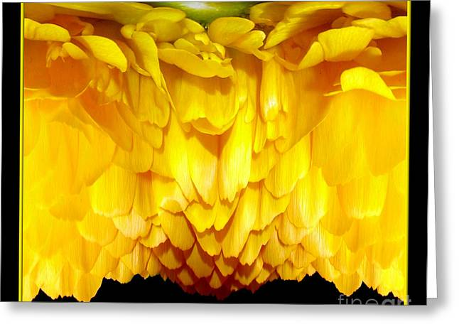Yellow Ranunculus Abstract Greeting Card by Rose Santuci-Sofranko