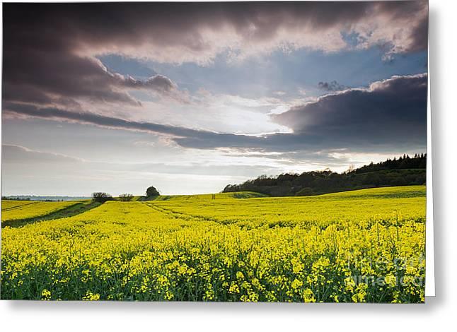 Yellow Rapeseed Field Beautiful Greeting Card by Boon Mee