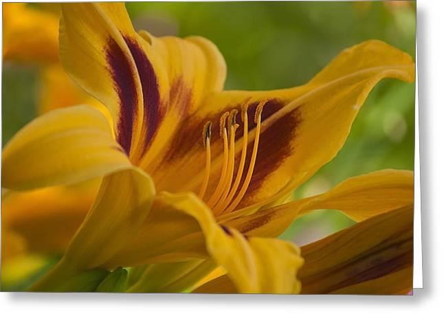 Yellow Rising Greeting Card by Matthew Blum