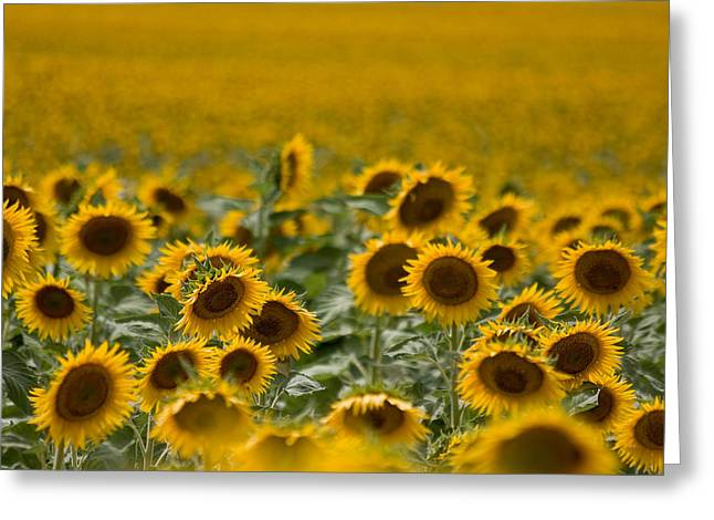 Greeting Card featuring the photograph Yellow by Ronda Kimbrow
