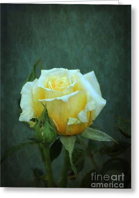 Greeting Card featuring the photograph Yellow Rose 2014 by Marjorie Imbeau