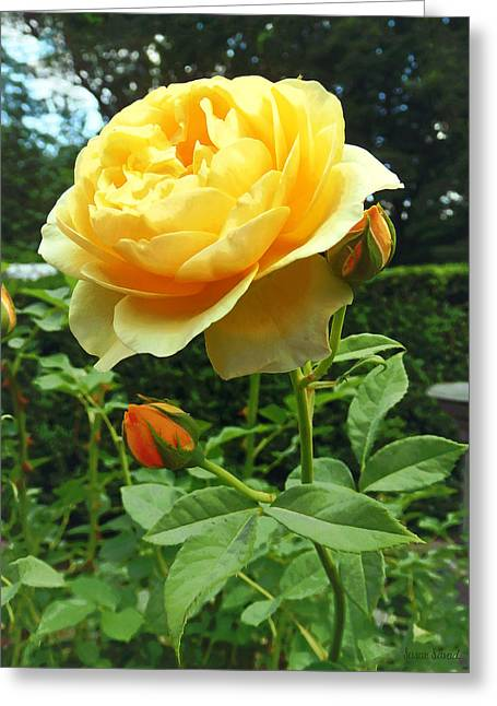 Yellow Rose And Buds Greeting Card by Susan Savad