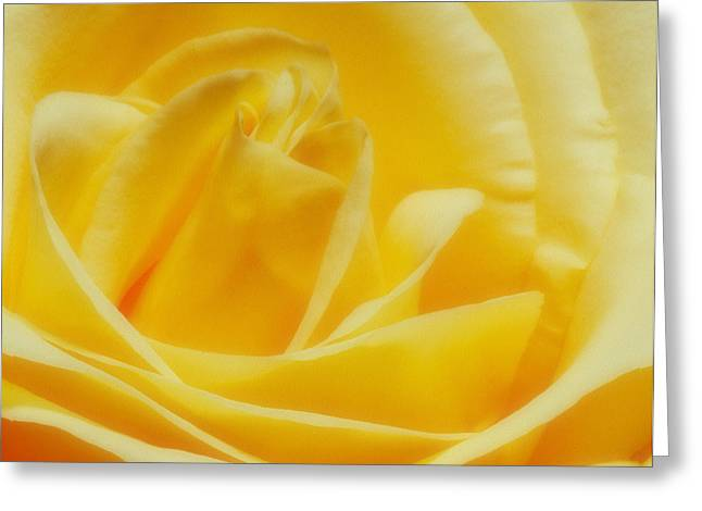 Greeting Card featuring the photograph Yellow Rose by Bob Coates