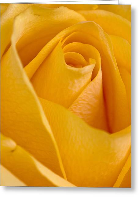 Greeting Card featuring the photograph Yellow Rose by Bob Noble Photography