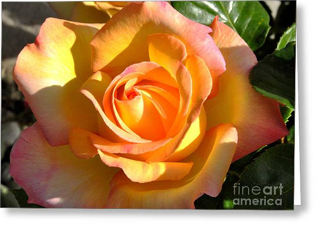 Greeting Card featuring the photograph Yellow Rose Bud by Debby Pueschel