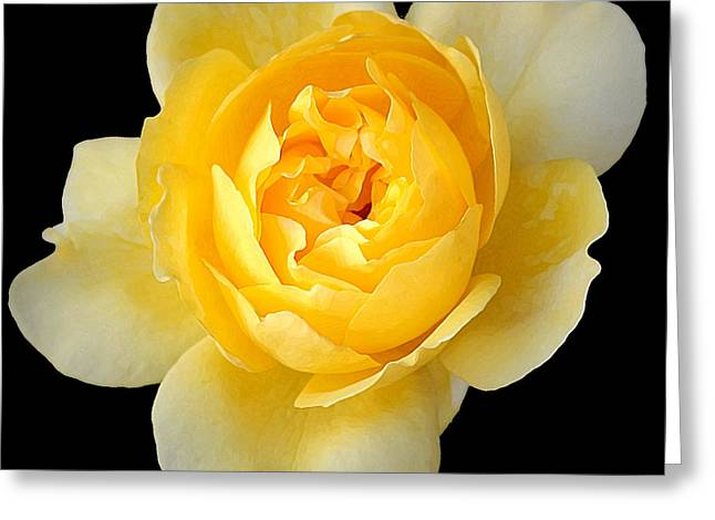 Yellow Rose Greeting Card by CarolLMiller Photography