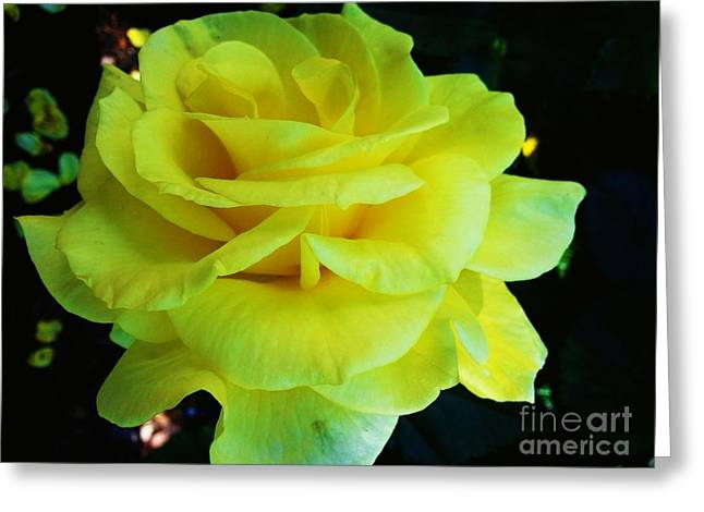 Yellow Rose Greeting Card by Heather L Wright