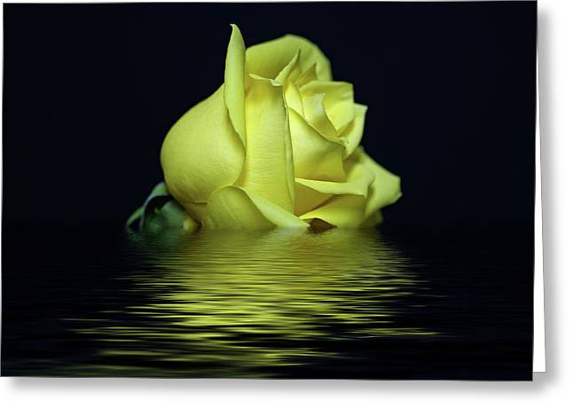 Yellow Rose II Greeting Card by Sandy Keeton