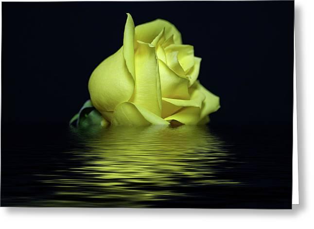 Yellow Rose II Greeting Card