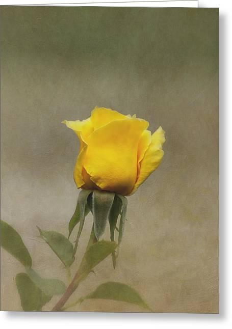 Yellow Rose Greeting Card by Kim Hojnacki