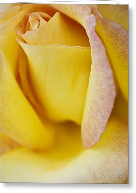 Greeting Card featuring the photograph Yellow Rose by Lana Enderle