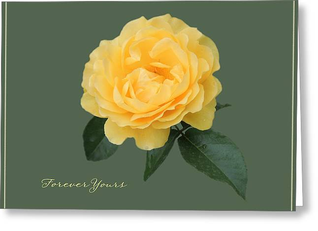 Yellow Rose Of Love Greeting Card by Teresa Schomig