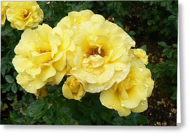 Yellow Rose Of Pa Greeting Card by Michael Porchik