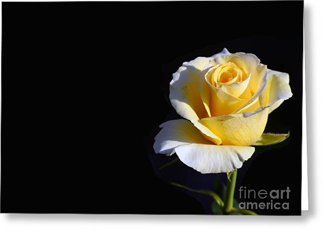 Yellow Rose On Black Greeting Card