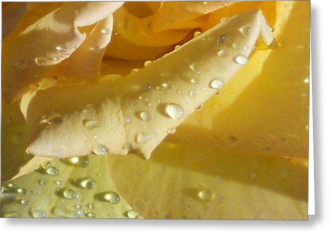 Yellow Rose Raindrops Greeting Card