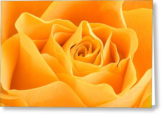 Yellow Rose Greeting Card by Tilen Hrovatic