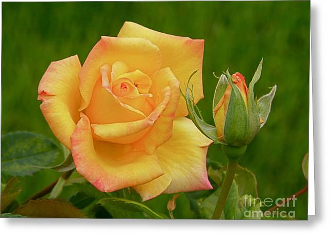 Greeting Card featuring the photograph Yellow Rose With Bud by Debby Pueschel