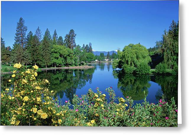Yellow Roses By Mirror Pond Greeting Card