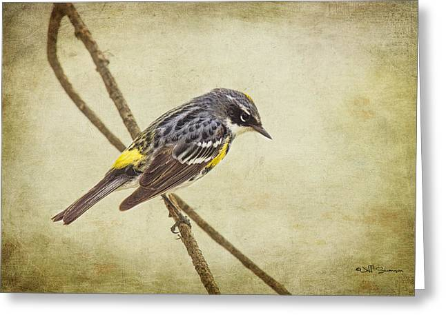 Yellow-rumped Warbler 2 Greeting Card by Jeff Swanson