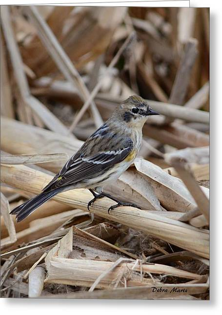 Greeting Card featuring the photograph Yellow-rumped Warbler by Debra Martz