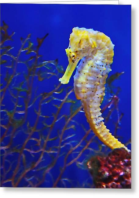 Yellow Sea Horse Greeting Card