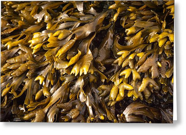 Yellow Sea Plant Greeting Card
