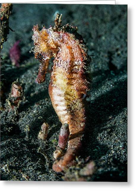 Yellow Seahorse Greeting Card