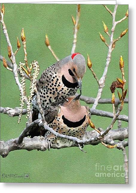Yellow-shafted Northern Flickers Greeting Card by J McCombie