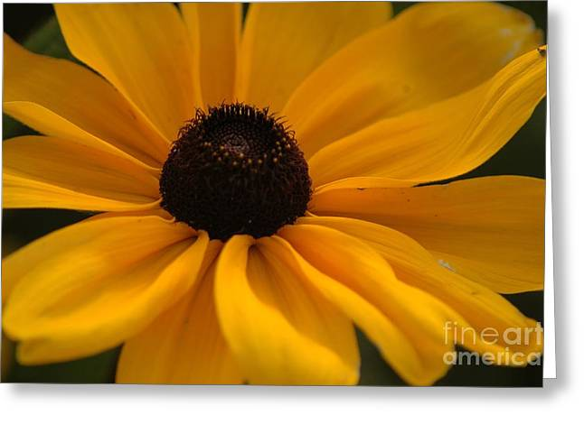 Yellow Silk Greeting Card by Kathleen Struckle