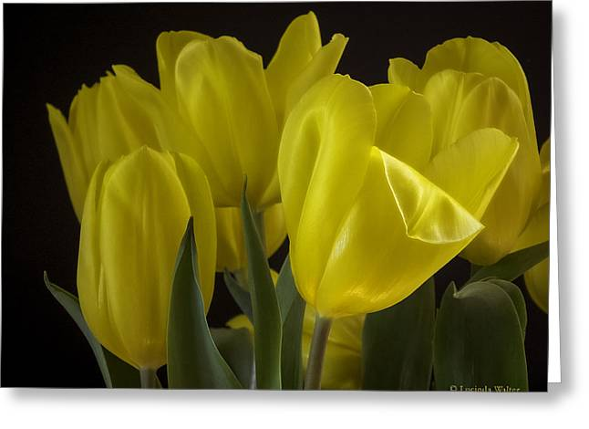 Greeting Card featuring the photograph Yellow Silk by Lucinda Walter