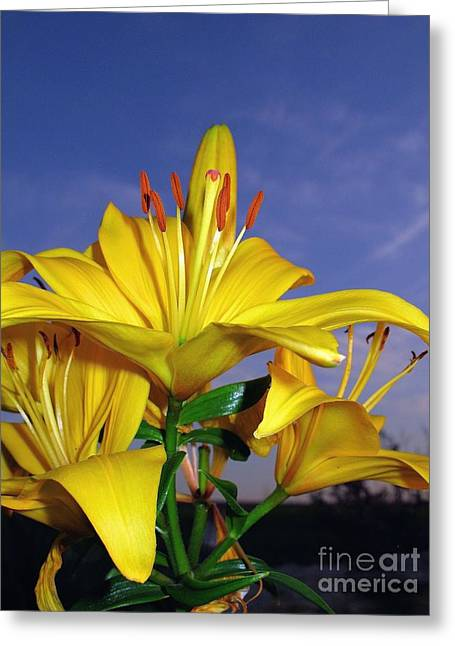 Yellow Spring  Greeting Card