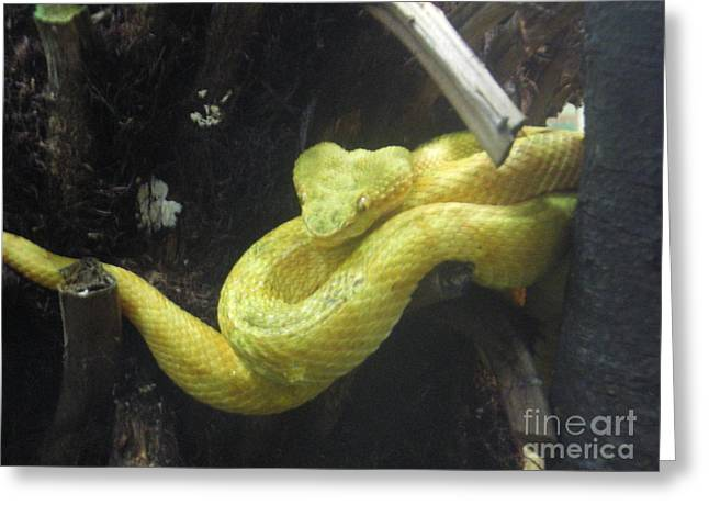 Yellow Snake Greeting Card by Ann Fellows