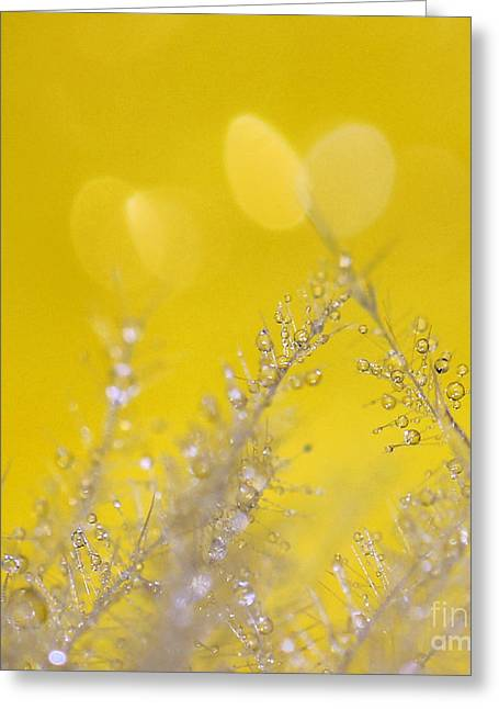 Yellow Sparkles Greeting Card by Karin Ubeleis-Jones