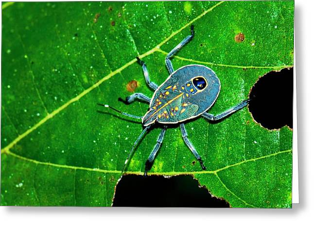 Yellow Spotted Stink Bug Greeting Card