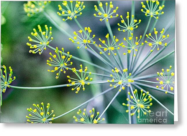 Greeting Card featuring the photograph Yellow Stars by JRP Photography