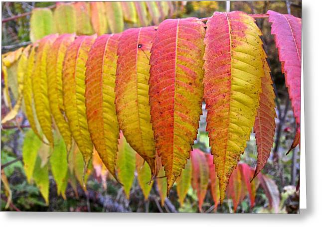 Yellow Sumac Leaves Greeting Card
