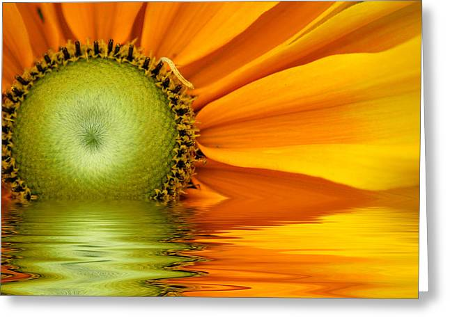 Yellow Sunflower Sunrise Greeting Card