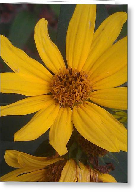 Yellow Sunshine Greeting Card by Kim Martin