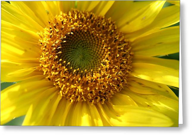 Yellow Sunshine Greeting Card by Neal Eslinger