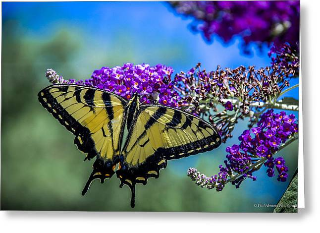 Greeting Card featuring the photograph Yellow Swallowtail by Phil Abrams