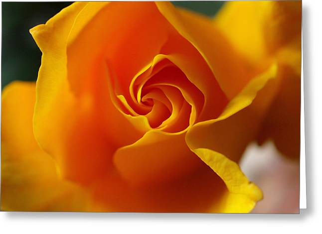 Greeting Card featuring the photograph Yellow Swirl by Joe Schofield