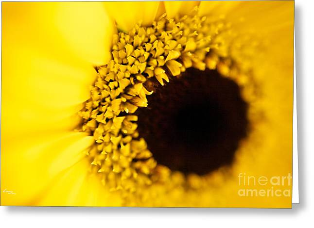 Yellow Greeting Card by T Lang