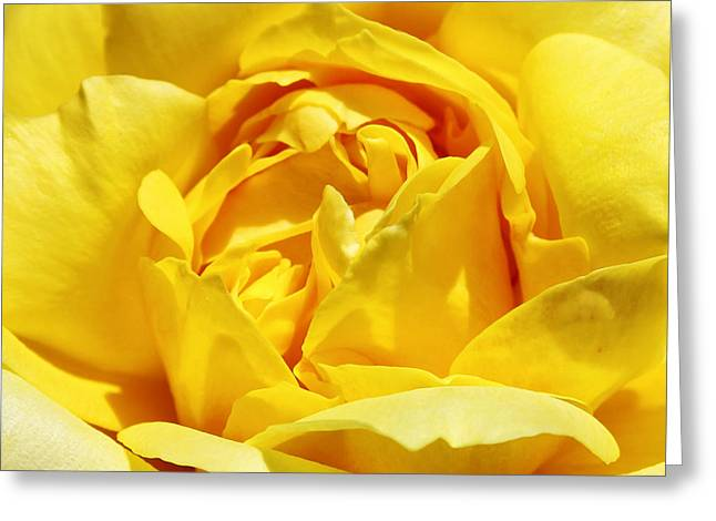 Yellow Tourmaline Rose Palm Springs Greeting Card by William Dey