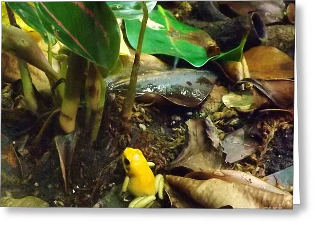 Yellow Tree Frog Greeting Card