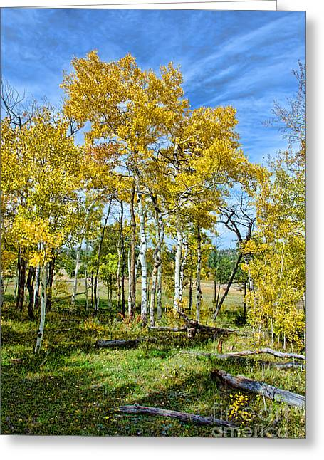 Yellow Tree Greeting Card by Keith Ducker
