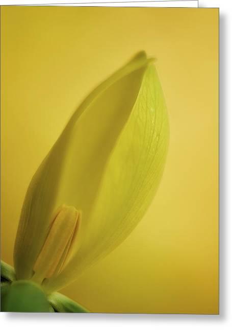 Yellow Trillium - Trillium Luteum Greeting Card