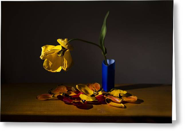 Yellow Tulip Greeting Card by Ivan Vukelic